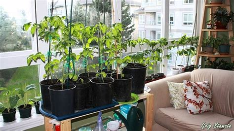 indoor garden 12 ways you can have an indoor garden 3 sold me