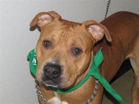 richland county pound mercy s door pet rescue ohio home