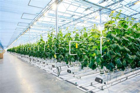 japans electronic giant panasonic   harvesting