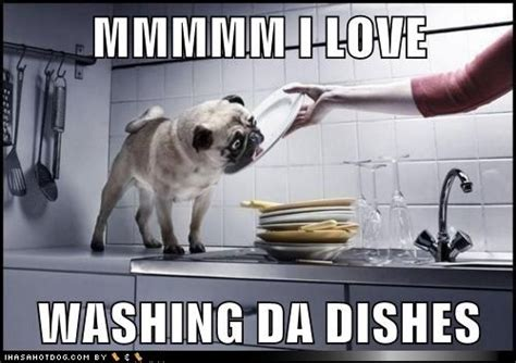 Washing Dishes Meme - the dog days of summer doggie funnies motley news