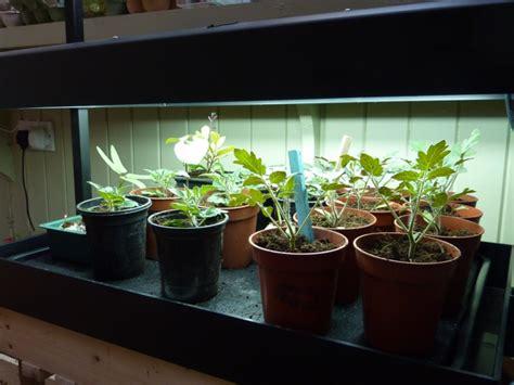 Patio Grow Lights Apartment Plants Outdoor Interior Design To Nature