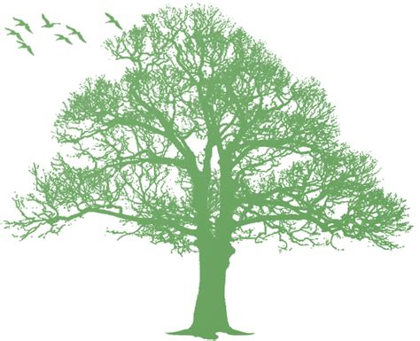 imagenes png naturaleza presentation name on emaze