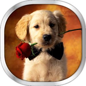 google images puppies dog puppies live wallpaper android apps on google play