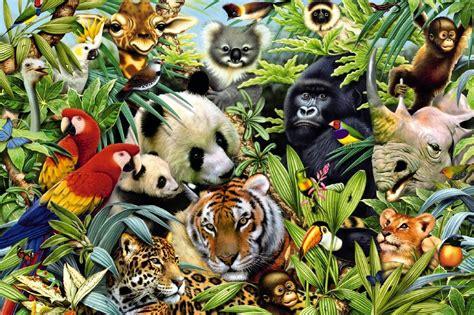 imagenes de animales y plantas de la selva los animales de la selva recurso educativo 104953 tiching