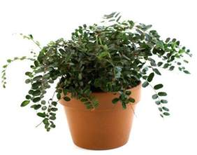 house plants safe for cats house plants that are safe for cats house plants safe for