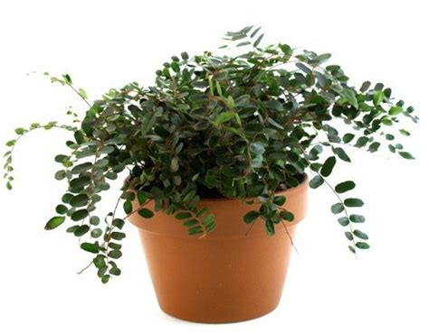 indoor plants for cats keeping your pets safe 10 non toxic house plants aspca