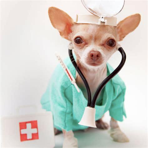 imagenes de medicas veterinarias veterinarios 169 veterinarios twitter