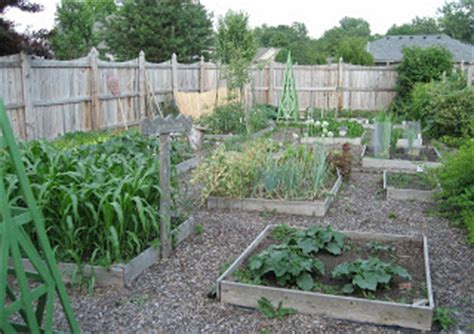 big vegetable garden how big is your vegetable garden
