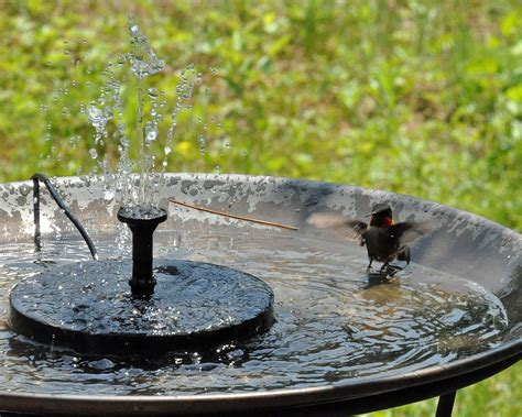 hummingbird bird bath bird cages