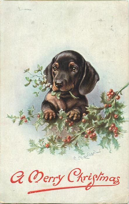 dachshund chewing christmas tree  front tuckdb postcards