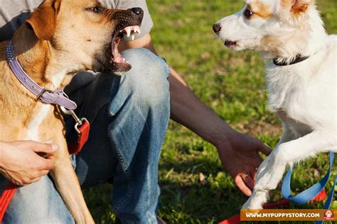 how to stop aggression how to stop aggression my puppy story