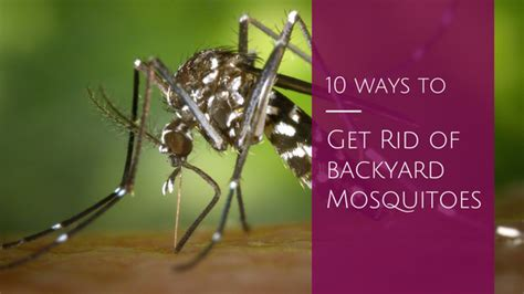 10 Ways To Get Rid Of Mosquitoes In Your Backyard Home Get Rid Mosquitoes Backyard