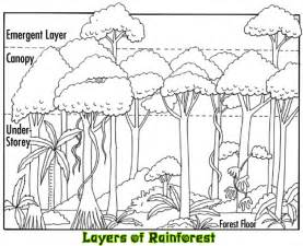 Layers Of The Rainforest Canopy by Layers Of The Rainforest Related Keywords Amp Suggestions