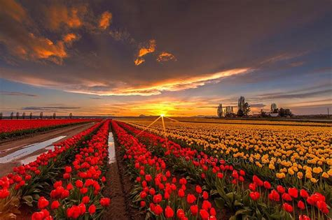 netherlands tulip fields the most beautiful of tulip fields in netherlands 2014