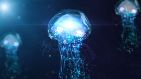 Jelly Glowing Alpha Arbutin 500gr jellyfish hd wallpaper and background image 1920x1080 id 309772