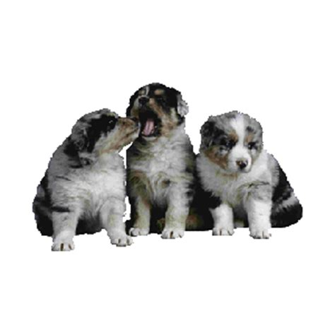 what age to neuter a best age to neuter or spay puppies or kittens
