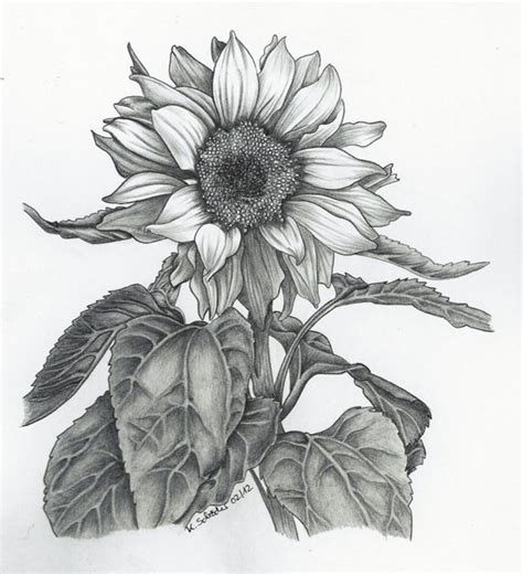How To Draw Sunflowers In A Vase by Sunflowers South Lake Arts And Photo