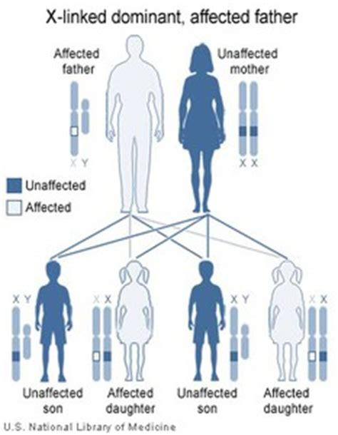 myotonic dystrophy pattern of inheritance inherited disorders chromosome abnormalities and disease