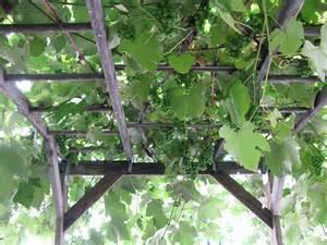 Simple Garden Trellis Grape Arbor 171 Freedom Baird
