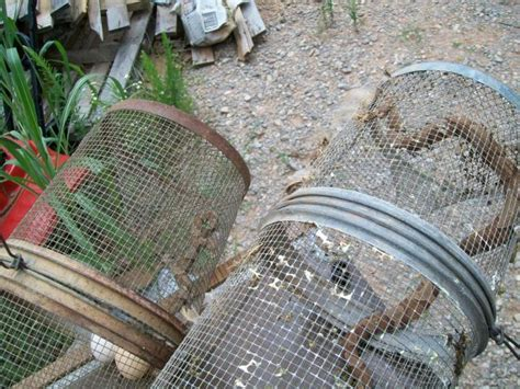 how to catch a snake in your backyard best way i ve found yet to deal with snake problems