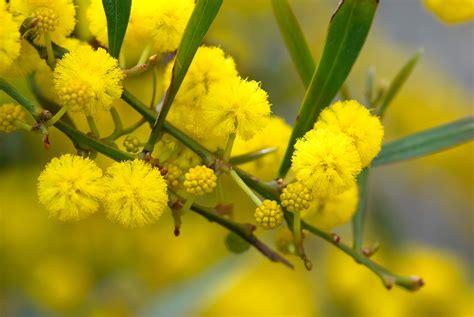 fiori gialli da giardino fiori gialli nomi piante perenni nomi dei fiori gialli