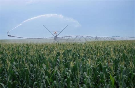 irrigated corn how much irrigation is needed on corn in the vegetative