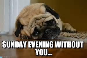 sad pug meme sunday evening without you sad pug meme on memegen