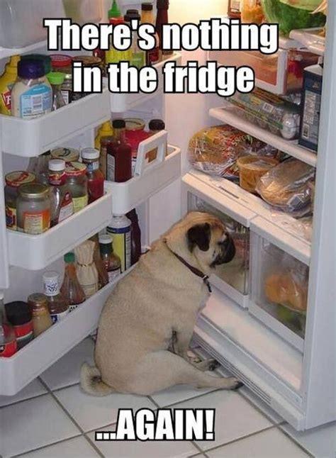 Fridge Meme - nothing in the fridge meme slapcaption com funny