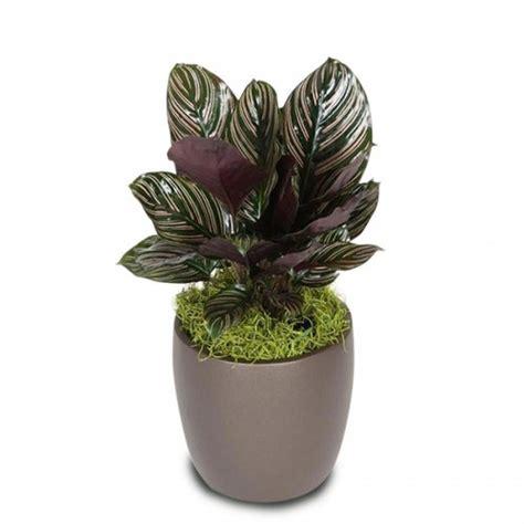 Planter Bag Ukuran 500 Liter Pot Tanaman jual tanaman calathea ornata hp 085608566034