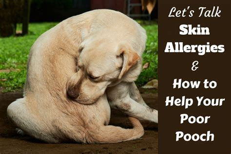 how to help dogs with skin understanding skin allergies and how to help your poor pooch