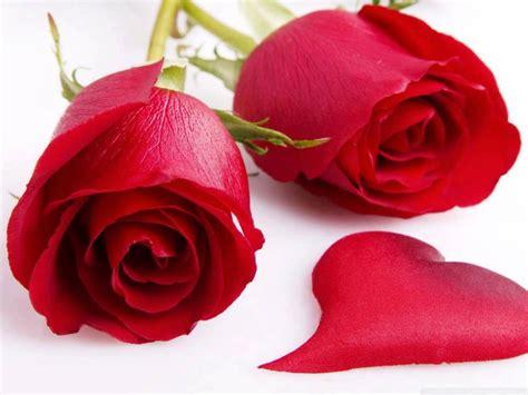 imagenes de rosas para enamorar 7 im 225 genes de rosas para enamorar s 243 lo imagenes de amor