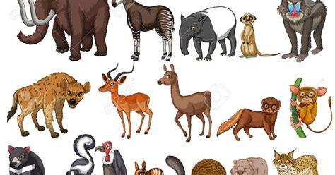 imagenes animales acuaticos y terrestres practica tipos de animales