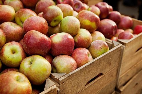 Which Ones Are Fall Fruits by Fruits And Vegetables What S In Season In Fall