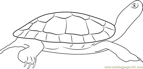 coloring page painted turtle painted turtle coloring page free turtle coloring pages