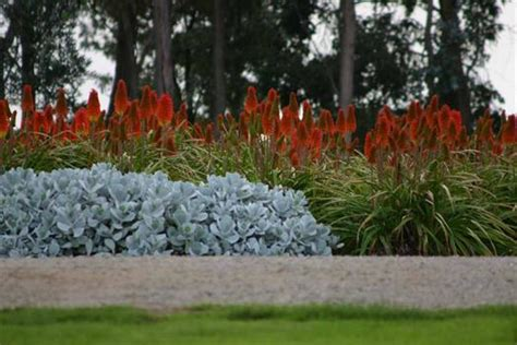 nobbies view drought tolerant plant farm shoreham vic garden design hotfrog australia
