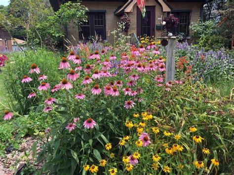 turn  yard   micro prairie  native plants