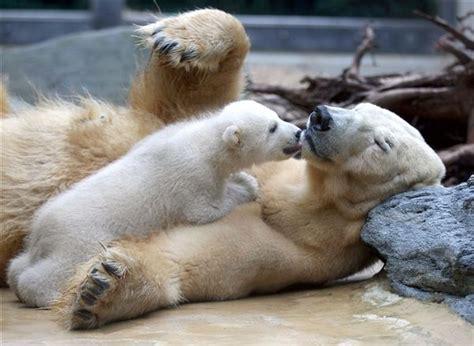 images  penguins polar bears walruses sea