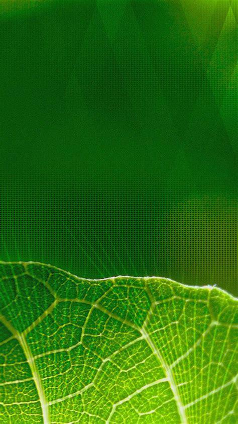 wallpaper iphone leaf green leaves iphone 6 wallpaper hd iphone 6 wallpaper