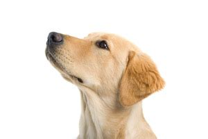 can dogs strokes how to treat canine stroke health pet care