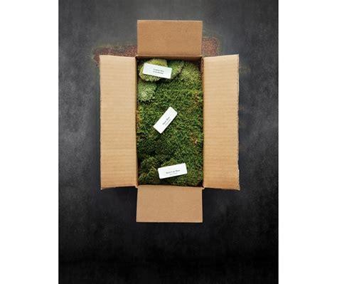 the best mail order plant sources gallery garden design