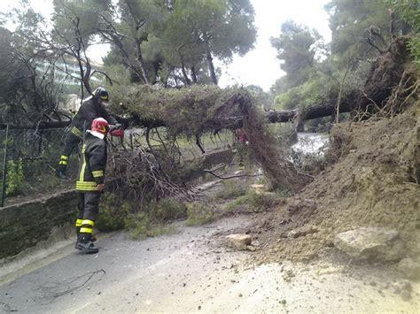 comune di bordighera ufficio tecnico bordighera due alberi cadono in via conca verde