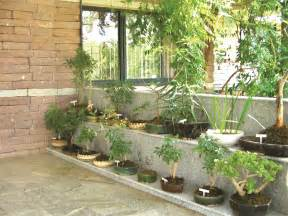 plants at home herbal gardens for urban homes city buzz