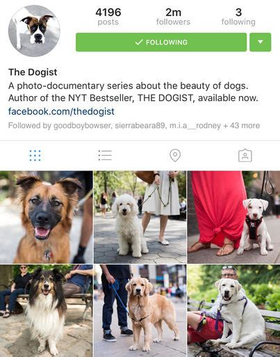 funny bio for dog instagram make me a nickname repost and see what you get 53642