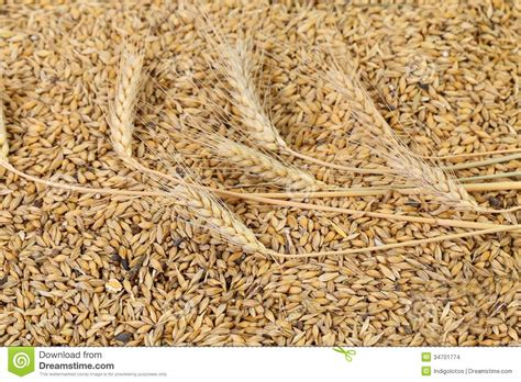 5 different whole grains blend of different grains up stock images image