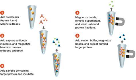 Surebeads Protein A Magnetic 생명 과학 연구 Bio Rad