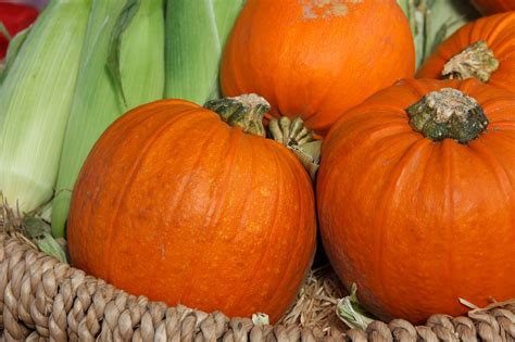 When Do Search For Recipes 10 Scarily Easy Pumpkin Recipes The Fit Formula