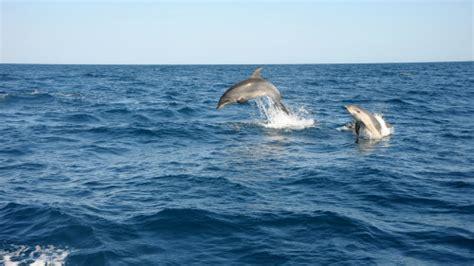 algarve experience catamaran croisi 232 re 224 la d 233 couverte des dauphins et des grottes