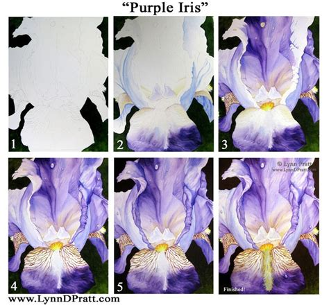 watercolor tutorial iris 125 best how to paint irises images on pinterest
