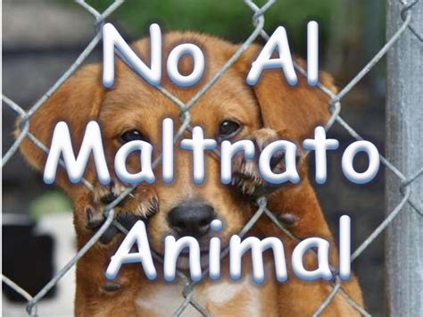 no maltrato animal maltrato animal