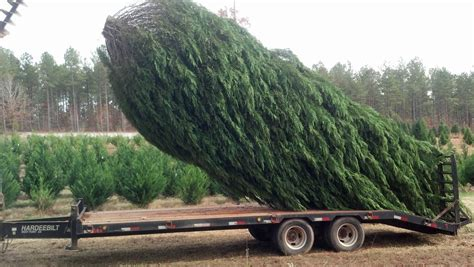 alabama marketmaker gilbert christmas tree farm